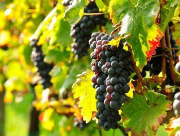 Vini Mezzetti
