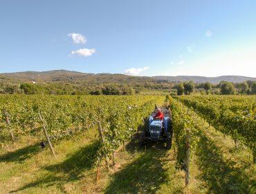 Vini Mezzetti - Cortona