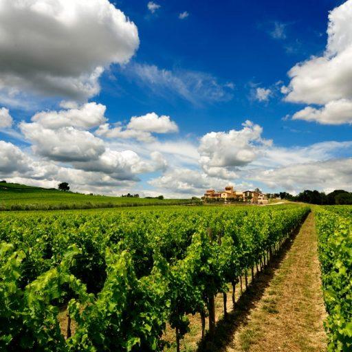 Wine tours - Cortonaweb
